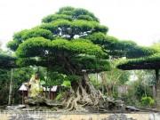 """Nhà đẹp - """"Siêu thị"""" cây thế tiền tỷ ở Điền Xá"""
