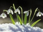 Nhà đẹp - Ngắm hoa tuyết điểm - biểu tượng mùa xuân sang