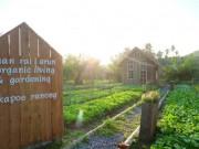Nhà đẹp - Mê mẩn vườn rau sạch đang gây sốt mạng xã hội