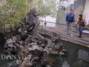 Nhà đẹp - Sự thật về kho báu dưới gốc cây sanh giá 14 tỷ ở Huế