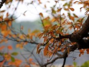 Tin tức - Hồ Gươm đẹp mơ màng mùa lộc vừng thay lá