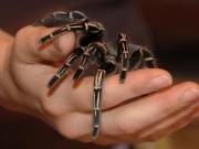 Sức khỏe - Triển vọng thuốc giảm đau giống nọc độc nhện