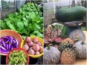 Nhà đẹp - Ghen tị vườn rau, trái khủng của mẹ Việt ở Malaysia