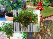 Nhà đẹp - Những chậu cây trái nhỏ xinh ngon mắt nhìn là muốn hái