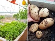 Nhà đẹp - Kinh nghiệm 4 năm trồng rau thùng xốp của đôi vợ chồng trẻ