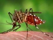 Tin tức - Hàn Quốc công bố trường hợp nhiễm virus zika đầu tiên