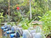 Tin tức - Bất ngờ vườn thực vật bằng vật liệu tái chế của học sinh