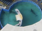 Cuộc đời cô đơn của chú cá voi bi kịch nhất thế giới