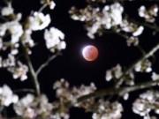 Tin tức - Chiêm ngưỡng 'mặt trăng máu' tuyệt đẹp trên khắp thế giới