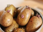 Sức khỏe - 10 món ăn khoái khẩu có thể gây chết người