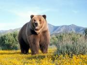 Sức khỏe - Coi chừng liệt dương, ung thư gan khi dùng mật gấu