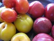 Sức khỏe - Những mối nguy hại cần biết khi ăn một số loại trái cây mùa hè
