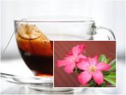 Nhà đẹp - Cây nở hoa rực rỡ nhờ tưới bã trà túi lọc