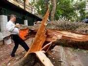 Tin tức - Giông lốc 2 người chết, gần 1.300 cây đổ: HN họp khẩn