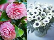 Nhà đẹp - Bất ngờ ý nghĩa 9 loài hoa phổ biến