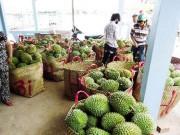 Mua sắm - Giá cả - Thương lái Trung Quốc mua sầu riêng non để ngâm hóa chất?