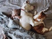 """Làm mẹ - """"Tan chảy"""" với những bức ảnh bé chụp cùng thú cưng"""