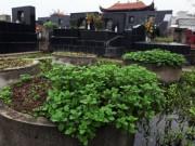"""Mua sắm - Giá cả - """"Ăn rau trồng ở nghĩa địa dễ mắc bệnh"""""""