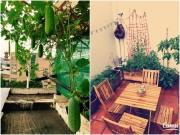 Đã con mắt những vườn rau sân thượng của sao Việt
