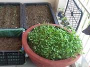Tin tức - Xúc tiến đề án trồng rau sạch trên địa bàn trong tháng 4