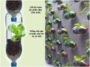 Nhà đẹp - Vườn treo từ trăm chai nước suối cho nhà chật