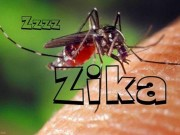 Tin tức - Cảnh báo virus Zika có thể gây viêm não ở cả người lớn