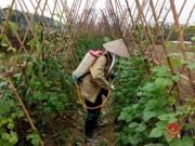 Mua sắm - Giá cả - Hà Nội: Chỉ 5% rau an toàn vào siêu thị!