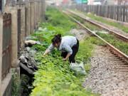 Tin tức - 'Né' rau bẩn người dân trồng rau cạnh đường tàu, sân thượng