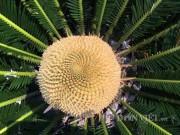 Nhà đẹp - Chiêm ngưỡng hoa của loài cây