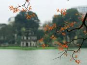 Tin tức - Mê mẩn ngắm Hồ Gươm mùa bằng lăng trổ lá