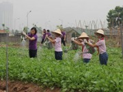 Tin tức - 'Đã mắt' với các vườn rau xanh mướt của học sinh tự trồng