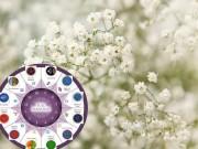 Nhà đẹp - Loài hoa may mắn cho 12 cung hoàng đạo