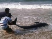 Tin tức - Thêm 5 thợ lặn ở vùng biển Formosa vào viện