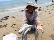 Tin tức - Cá chết hàng loạt ở Việt Nam lên báo nước ngoài