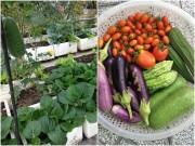 Nhà đẹp - Vợ chồng trẻ trồng 200 thùng rau, nuôi chim bồ câu trên sân thượng