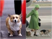 """Nhà đẹp - Mê tít dàn vệ sĩ """"mông to, chân ngắn"""" của Nữ hoàng Anh"""