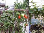 Nhà đẹp - Bà ngoại tuổi 50 dỡ mái tôn, xây luống trồng rau sân thượng