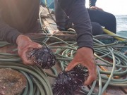 Ngày mới - Quảng Bình: Rạn san hô gần bờ đang chết