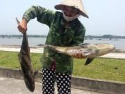 Ngày mới - Cá lồng ở cửa biển Thanh Hóa chết bất thường hàng loạt