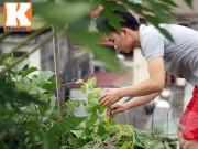 Nhà đẹp - Chàng trai nuôi lợn, gà và trồng rau sạch giữa Thủ đô