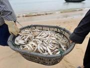 Tin tức - Đừng vì cá chết mà quay lưng lại với hải sản
