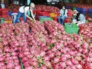 Mua sắm - Giá cả - Úc xem xét nhập khẩu thanh long Việt Nam