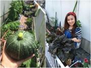 Nhà đẹp - Nàng dâu 8x trồng vườn rau Việt trên đất Nhật