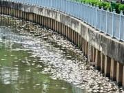 Tin tức - TPHCM công bố nguyên nhân cá chết trắng kênh Nhiêu Lộc