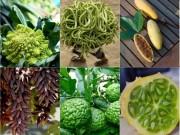 Nhà đẹp - Kỳ thú 6 loại quả mang dáng vẻ