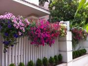 Nhà đẹp - 9 loài hoa treo giỏ rực rỡ nhất, dễ trồng nhất trong nhà
