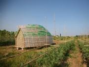 Nhà đẹp - Hải Phòng: Nhà ươm rau siêu chất từ tre và chai nhựa