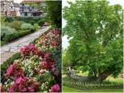 Nhà đẹp - Những khu vườn đẹp như mơ của cha đẻ