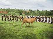 Tin tức - Bộ ảnh kỷ yếu dân dã với đồng cỏ và con bò