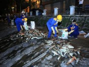 Tin tức - Trắng đêm vớt cá chết tại hồ Hoàng Cầu
